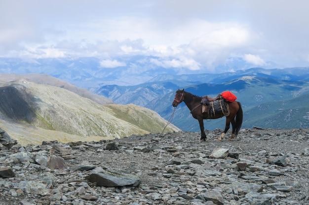 Cheval sur la montagne passer karaturek vue panoramique dans les montagnes de l'altaï, russie