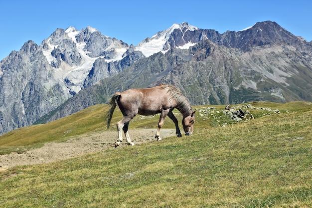 Cheval paissant sur une des montagnes