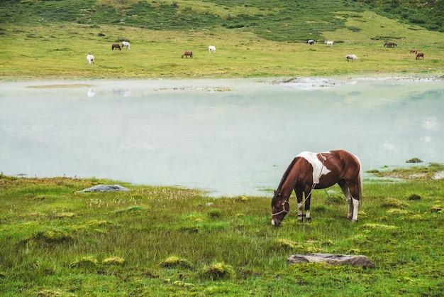 Cheval pie sur les prairies près du lac de montagne.