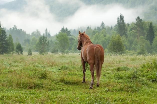 Cheval sur la prairie de brouillard