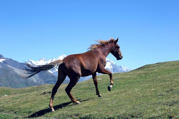 Cheval qui court dans l'herbe verte sur fond de montagnes