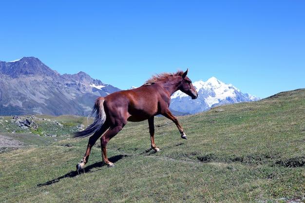 Cheval qui court dans l'herbe verte sur une des montagnes