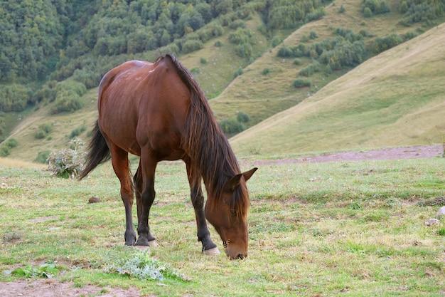 Un cheval sauvage brun paissant dans un pré des contreforts
