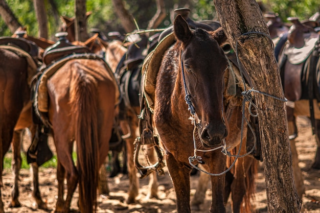 Chevaux attachés à un arbre en groupe lors d'un voyage en république dominicaine