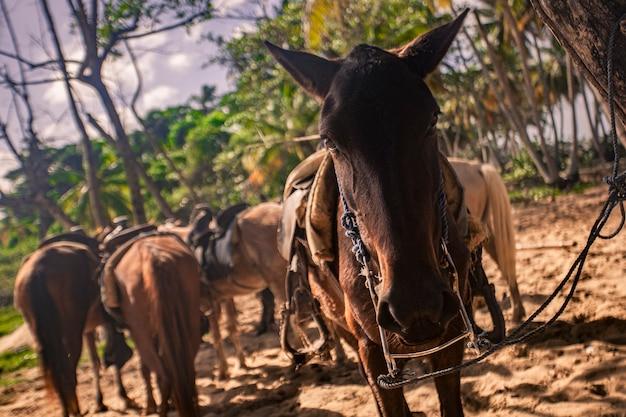 Chevaux attachés dans un groupe attendant de reprendre le voyage