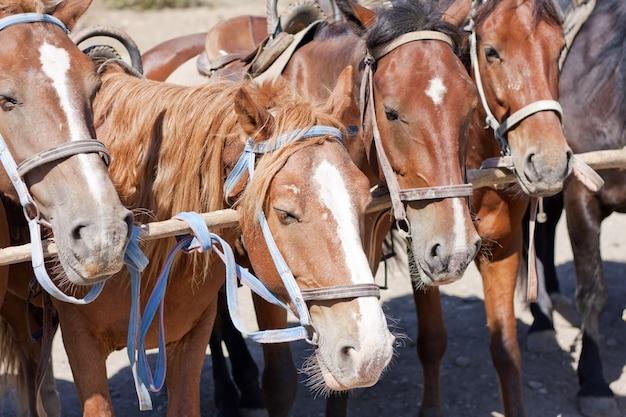 Chevaux bruns sur ranch