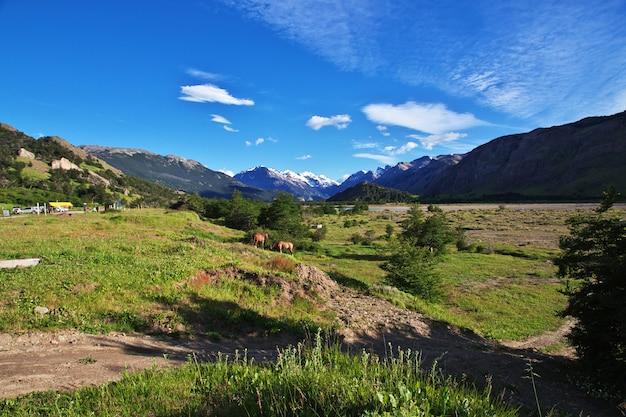 Chevaux dans le village d'el chalten en patagonie, argentine