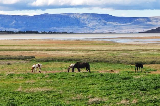 Chevaux sur lago argentino à el calafate, patagonie, argentine