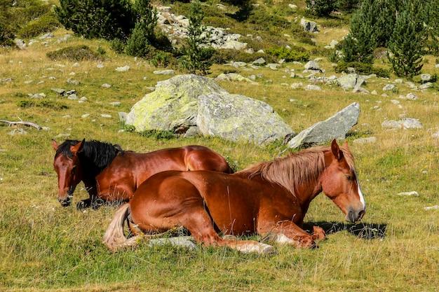 Chevaux en liberté, parc national d'aigãƒâƒã'â¼estortes i estany de sant maurici.