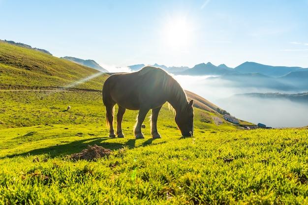 Chevaux libres au lever du soleil au sommet du mont larrau, mer de noix en arrière-plan. dans la forêt ou la jungle d'irati, pyrénées-atlantiques de france