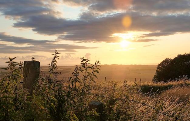 Chevaux paissant dans un paysage rural sous la chaleur du soleil avec des couleurs bleu jaune et orange broutant des arbres et vue étendue
