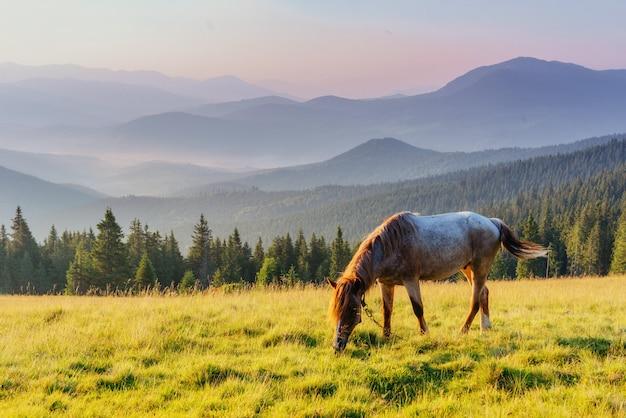 Chevaux sur le pré dans les montagnes