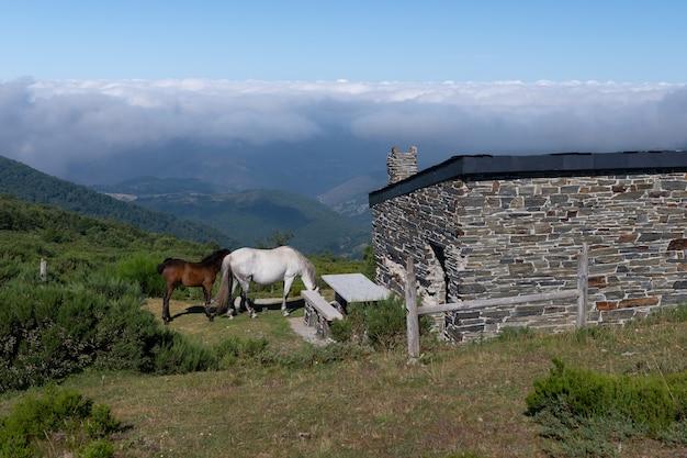 Chevaux près d'une maison de berger dans les montagnes, paysage de montagne