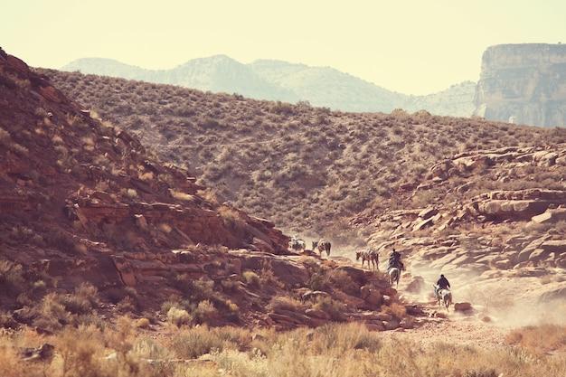 Chevaux qui courent dans les montagnes