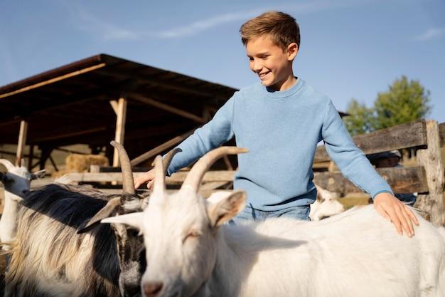 Chèvres de petit coup moyen