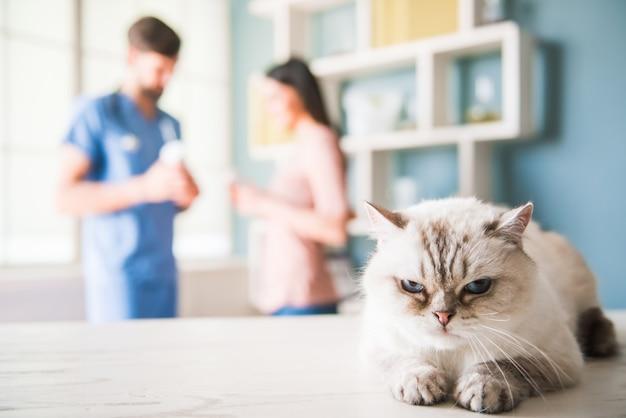 Chez le vétérinaire
