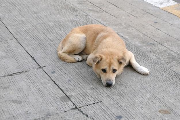 Chien abandonné dans la rue