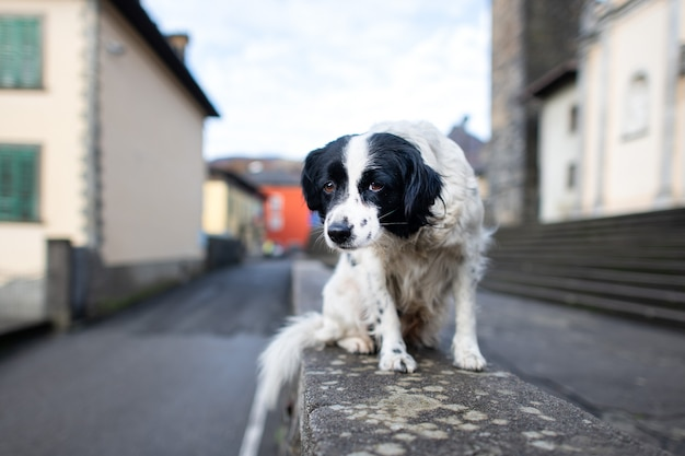 Un chien abandonné debout sur un mur dans une ville