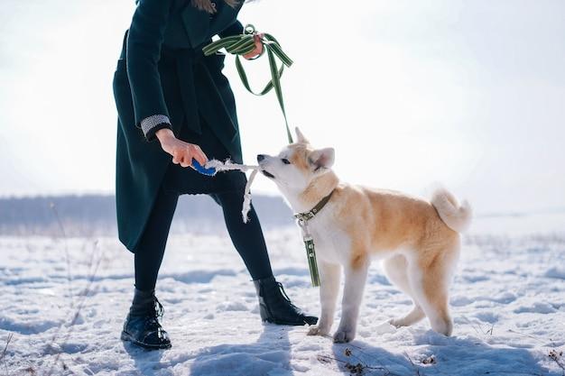 Un chien akita inu avec une laisse verte joue avec un jouet en corde avec une femme en manteau vert foncé
