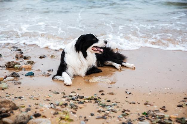 Chien allongé et relaxant sur la plage