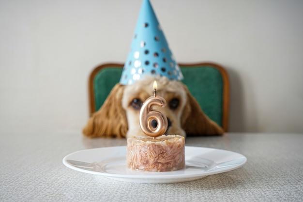 Chien d'anniversaire. cocker américain