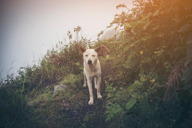 Un chien asiatique heureux halète et sourit comme il est dehors sur une promenade dans les bois.