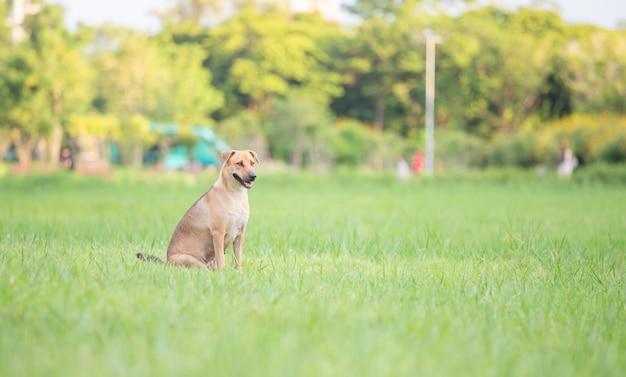 Chien assis sur l'herbe