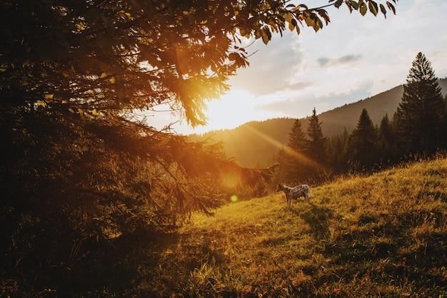 Chien au coucher du soleil dans les montagnes