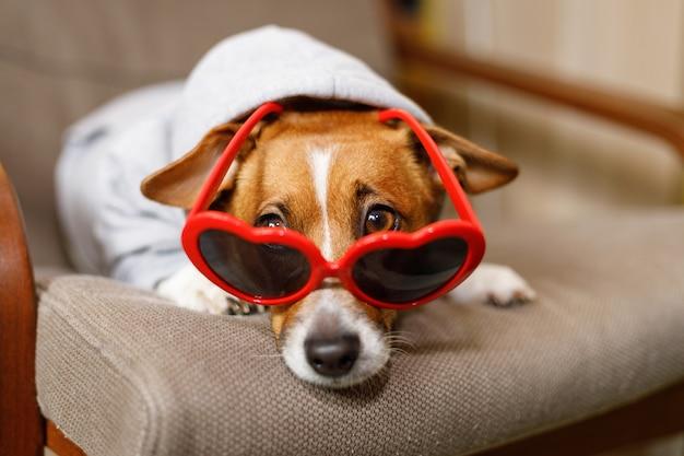 Chien au soleil dans des lunettes, yeux cachés, dans un canapé.