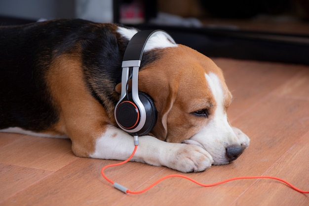 Chien beagle portant des écouteurs