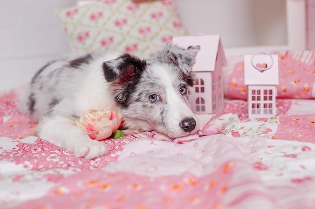 Chien de berger australien avec décoration rose