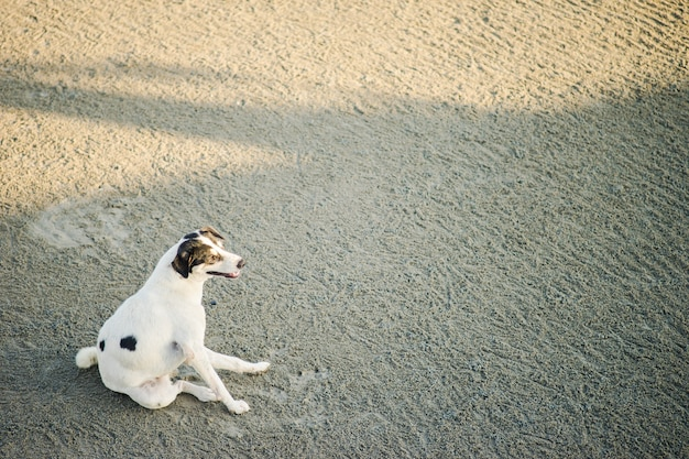 Chien blanc assis sur la plage le soir
