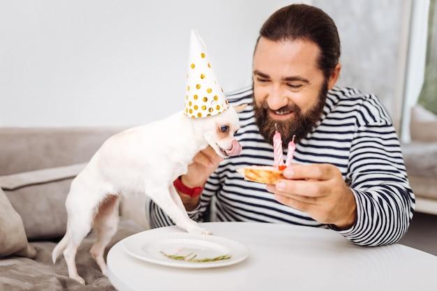 Chien blanc ayant un réel appétit pour essayer un gâteau d'anniversaire sucré tout en se tenant près de son propriétaire