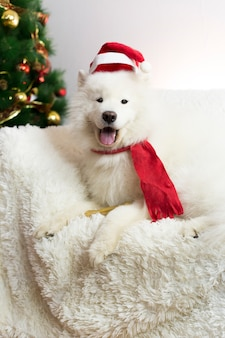 Chien blanc dans une écharpe rouge et un bonnet.