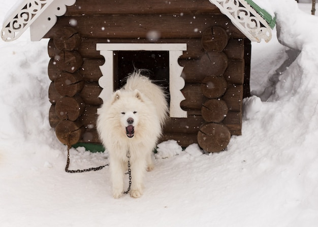 Chien blanc moelleux dans la neige