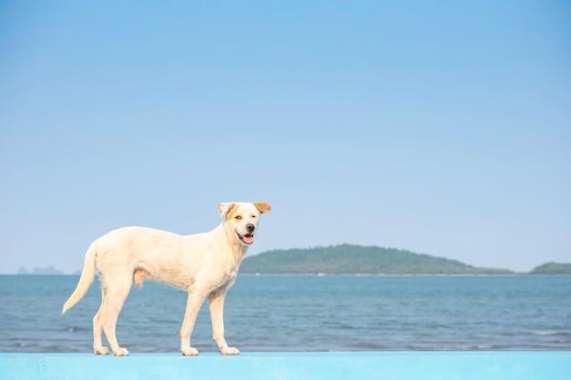 Chien blanc se dresse sur une route en béton contexte océan et île.