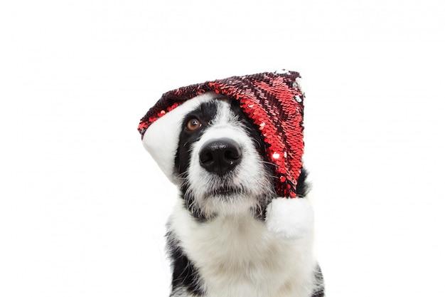 Chien border collie doux célébrant les vacances de noël portant un chapeau de père noël à paillettes rouges.