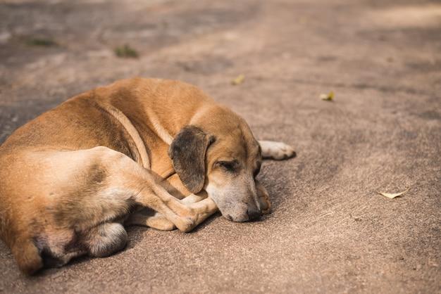 Chien brun abandonné sans abri dormant dans la rue