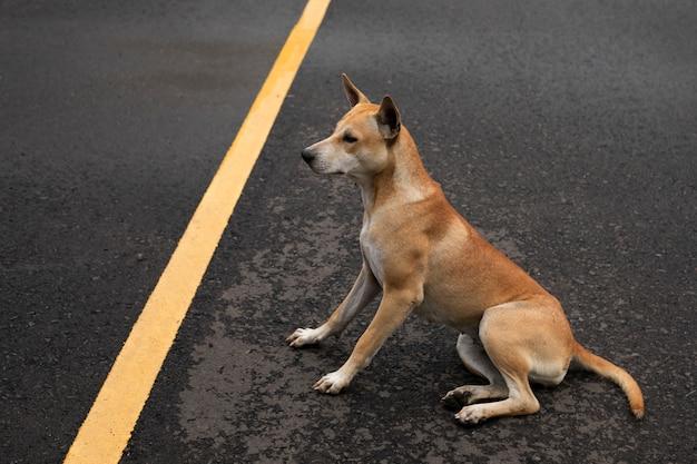 Chien brun assis sur la route pavée.