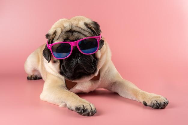 Chien carlin drôle avec des lunettes roses sur mur rose