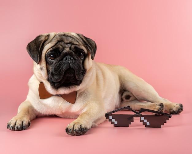 Chien carlin mignon avec des lunettes pixel sur fond rose.