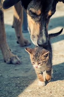 Chien et chat chiot