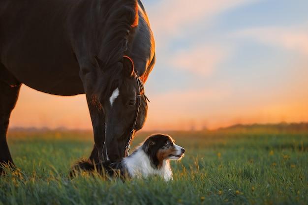 Chien et cheval dans le domaine