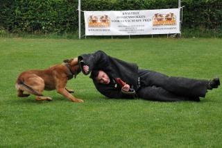 Chien chien de police