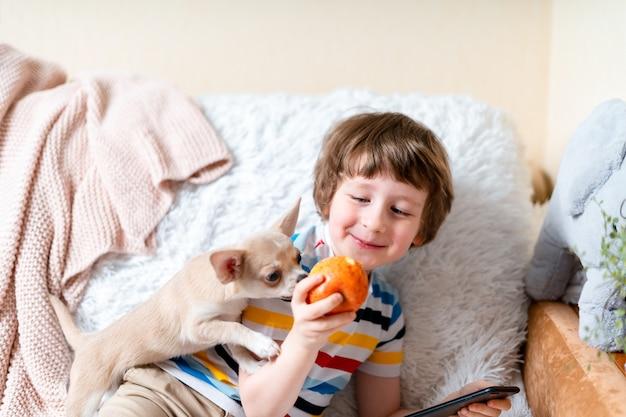 Un chien chihuahua lèche le petit visage d'un enfant riant sur un canapé avec une couverture portrait d'un heureux caucasien