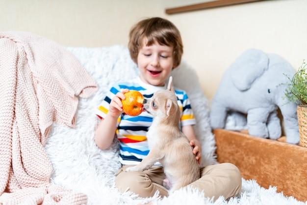 Chien chihuahua lèche le visage de petit enfant qui rit sur un canapé avec une couverture. portrait d'un heureux