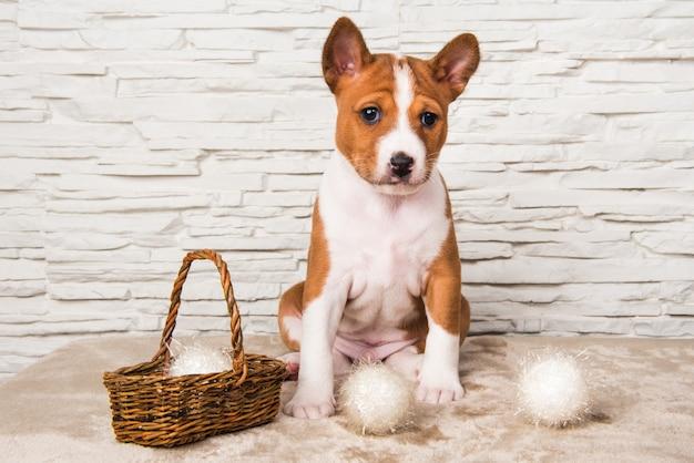 Chien chiot basenji drôle avec boule blanche ou panier de boules de neige le nouvel an, noël