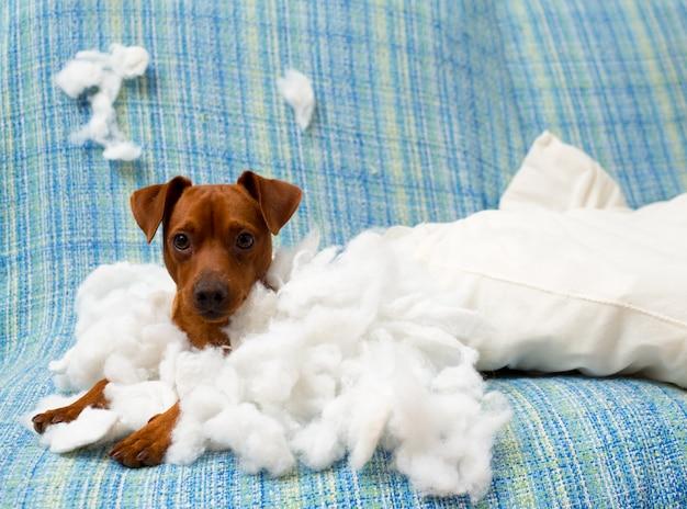 Chien chiot espiègle après avoir mordu un oreiller