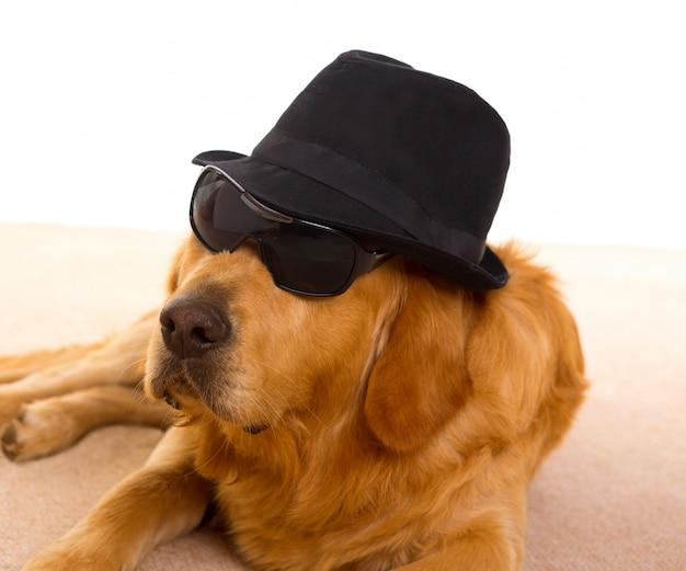 Chien comme gangster de la mafia avec chapeau noir et lunettes de soleil