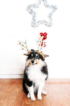 Chien avec des cornes de cerf pour le nouvel an et noël, décoration de la maison pour les vacances, chiot